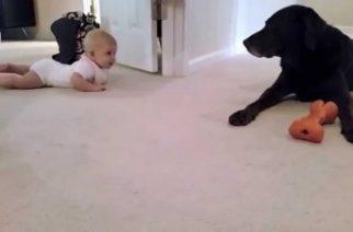 Bebeğin ilk defa emeklediğini gören köpek duygulanıyor!!